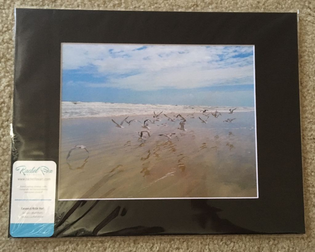 Daytona Beach Birds 11x14 Matted Photo